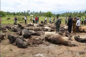 Mvomero3 300x198 Mapigano ya wakulima na wafugaji wilayani Mvomero yaibuka tena na kuua ngombe 79 na mtu mmoja