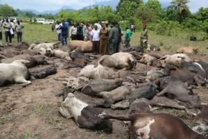 Mvomero7 300x200 Mapigano ya wakulima na wafugaji wilayani Mvomero yaibuka tena na kuua ngombe 79 na mtu mmoja