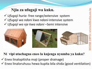 chicken management swahili 003 300x225 Ufugaji wa kuku kwa njia ya kisasa