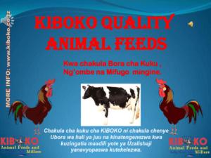 chicken management swahili 001 300x225 Ufugaji wa kuku: Namna ya kuanza na mchanganuo wa mapato na matumizi