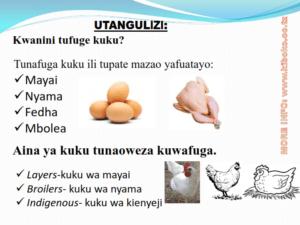 chicken management swahili 002 300x225 Ufugaji wa kuku: Namna ya kuanza na mchanganuo wa mapato na matumizi
