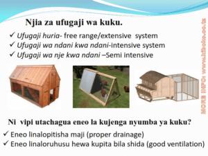 chicken management swahili 003 300x225 Ufugaji wa kuku: Namna ya kuanza na mchanganuo wa mapato na matumizi