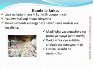chicken management swahili 004 300x225 Ufugaji wa kuku: Namna ya kuanza na mchanganuo wa mapato na matumizi