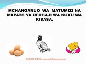 chicken management swahili 008 300x225 Ufugaji wa kuku: Namna ya kuanza na mchanganuo wa mapato na matumizi