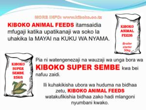 chicken management swahili 028 300x225 Ufugaji wa kuku: Namna ya kuanza na mchanganuo wa mapato na matumizi