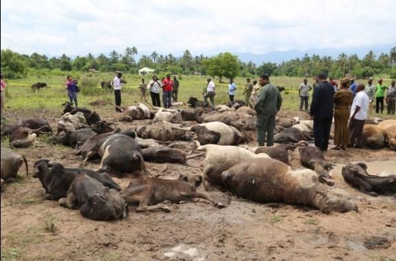 Mapigano ya wakulima na wafugaji wilayani mvomero yaibuka tena na kuua ng'ombe 79 na mtu mmoja